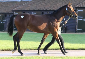 galileo lot 442 top price 2014 tatt