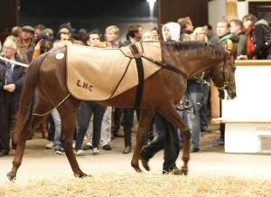 havana cooler top price tatt in training 2014