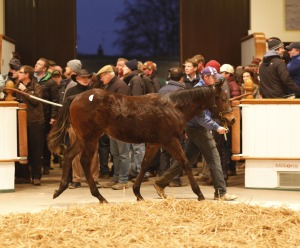 1039 top price december foal sea the stars