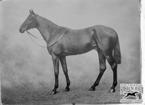 Galtee More Horse