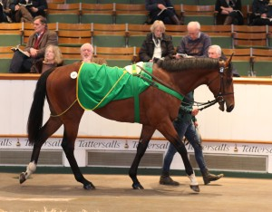 Lot 47 TCB0549©Tattersalls