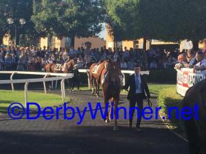 derby 2016.1