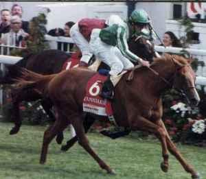 lammtarra derby 95