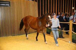 Lot_97 galileo filly