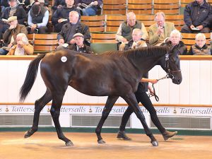 dubawi-427-tatts2016-b1