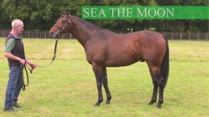 seathemoon stallion