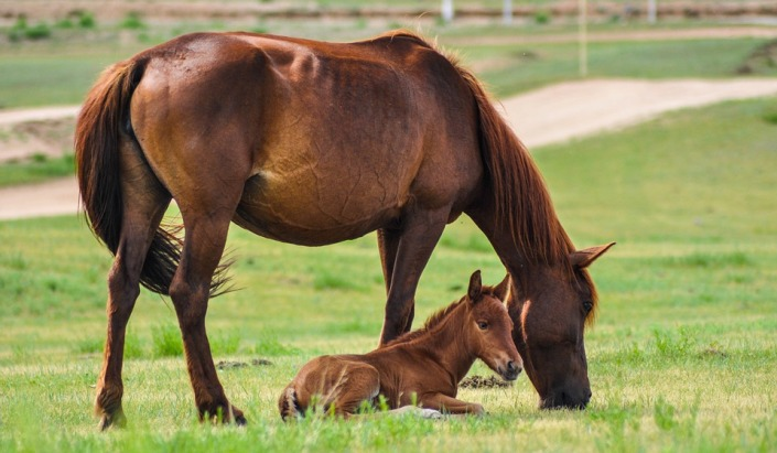 mare and foal3