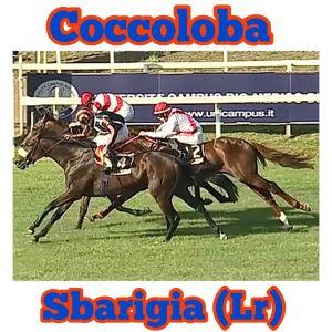coccoloba sbarigia 2020